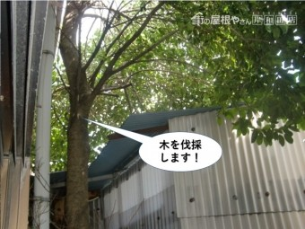 岸和田市の木を伐採します