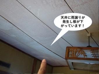 貝塚市の和室の天井に雨漏りが発生し天井板が下がっています