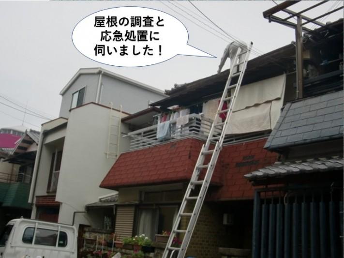 和泉市の屋根の調査と応急処置