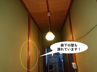 岸和田市の廊下の壁も濡れています