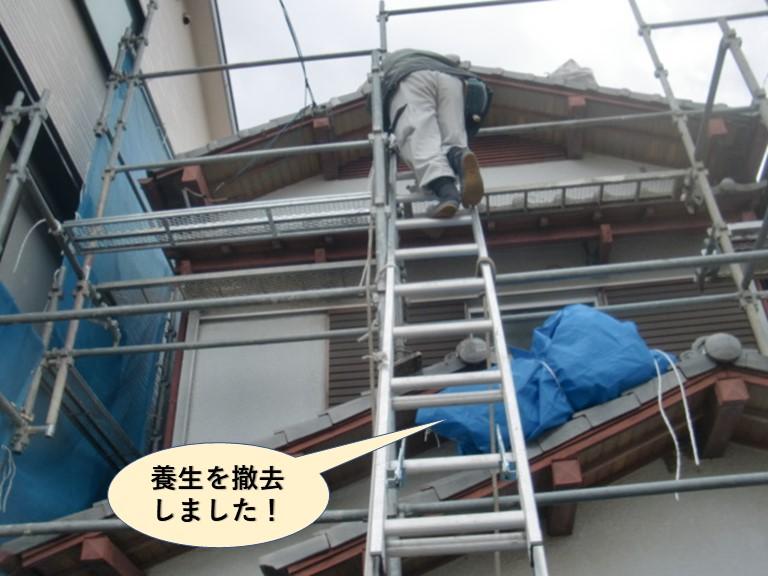 和泉市の養生を撤去