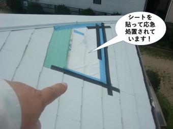 泉南市の屋根にシートを貼って応急処置されています