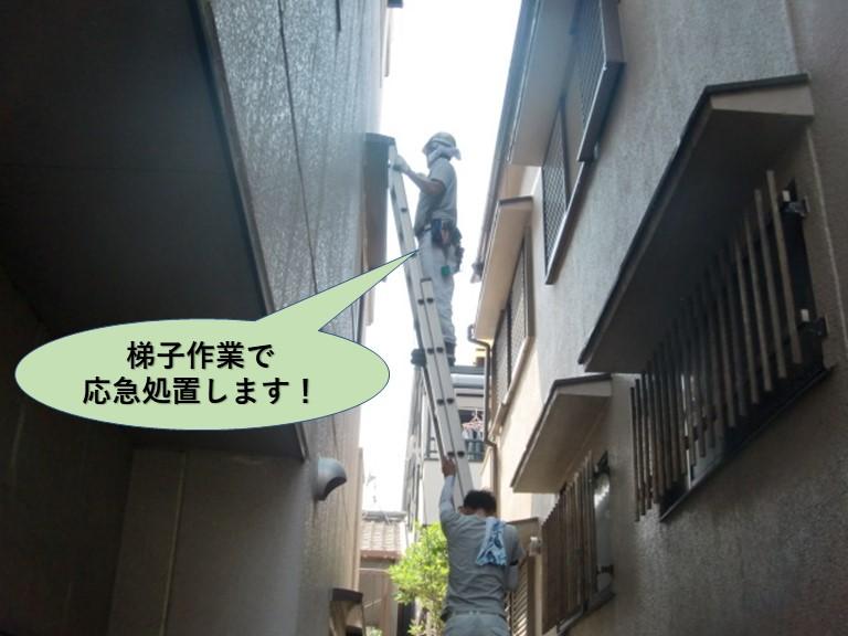 堺市の梯子作業で応急処置