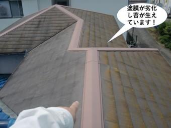 岸和田市の塗膜が劣化し苔が生えています