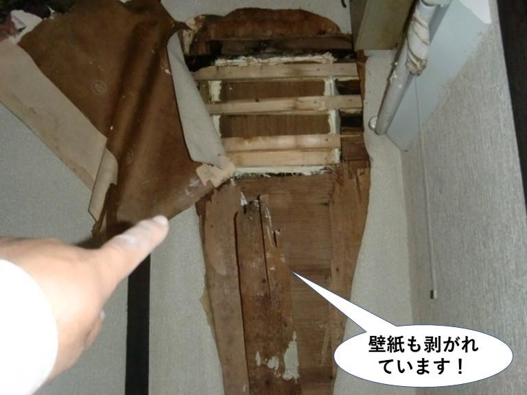 阪南市の壁紙も剥がれています