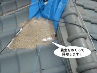 和泉市の養生をめくって掃除します