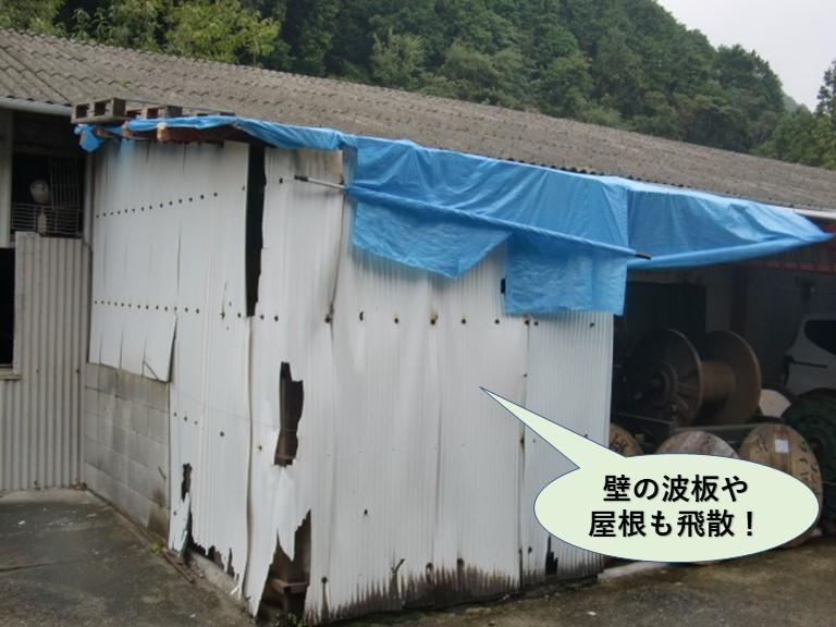 岸和田市の小屋の壁の波板や屋根も飛散
