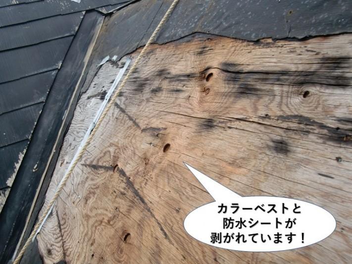 貝塚市のカラーベストと防水シートが剥がれています