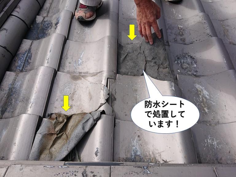 阪南市の割れた瓦に防水シートで処置しています