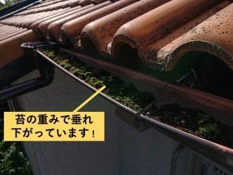 和泉市の樋が苔の重みで垂れ下がっています