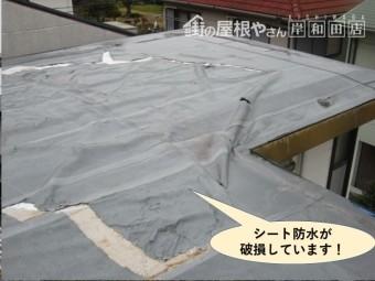 貝塚市の陸屋根のシート防水が破損しています