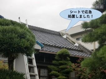 岸和田市の屋根をシートで応急処置