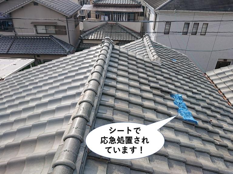 泉佐野市の屋根をシートで応急処置