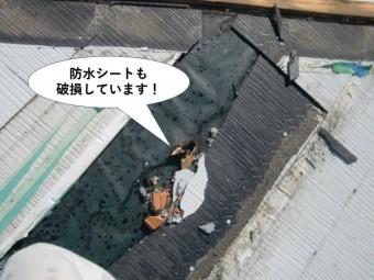 泉南市の屋根の防水シートも破損しています