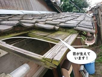 貝塚市の玄関屋根の下地に苔が生えてています