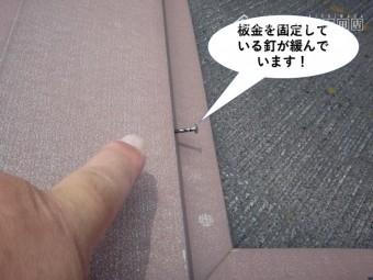 岸和田市の屋根の板金を固定している釘が緩んでいます
