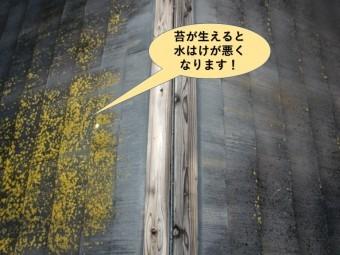 岸和田市の屋根点検・苔が生えると水はけが悪くなります