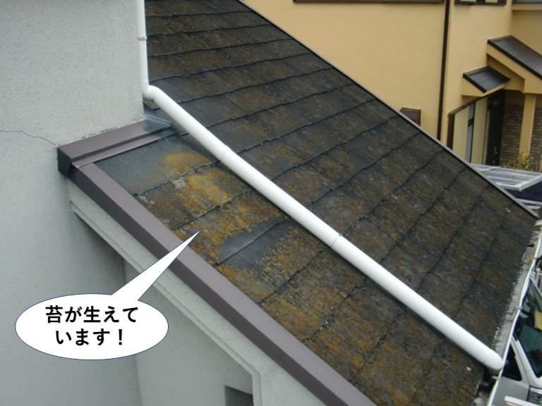 泉南市の屋根に苔が生えています