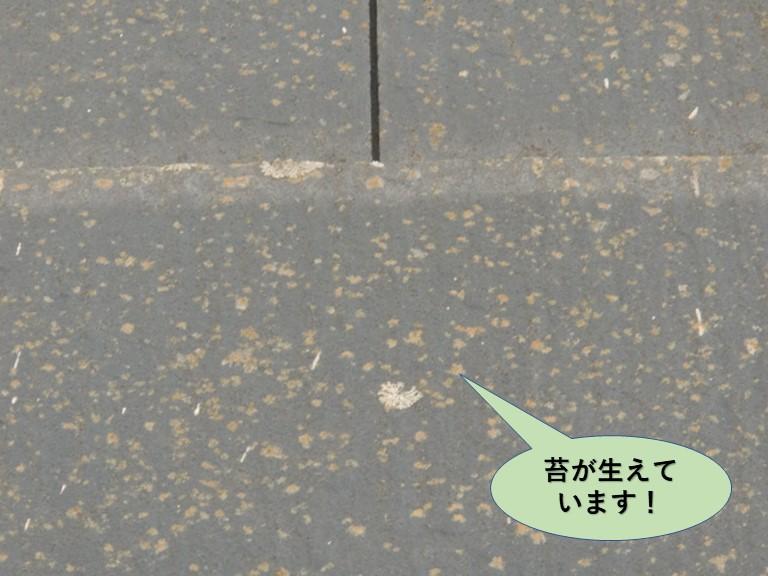 岸和田市の屋根に苔が生えています