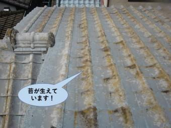 和泉市の屋根に苔が生えています