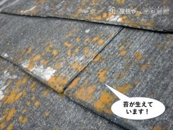 泉大津市の屋根に苔が生えています