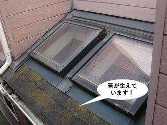 和泉市の下屋に苔が生えています