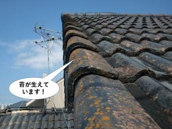 岸和田市のセメント瓦に苔が生えています