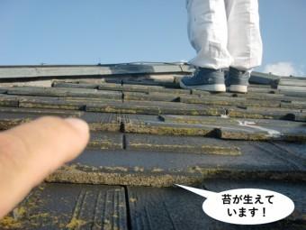 忠岡町の屋根に苔が生えています