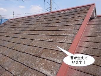 阪南市の屋根に苔が生えています