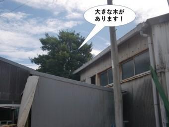 岸和田市の倉庫の横に大きな木があります