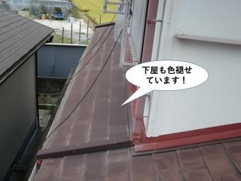 貝塚市の下屋も色褪せています