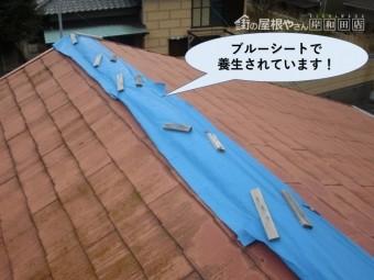 阪南市の棟をブルーシートで養生されています