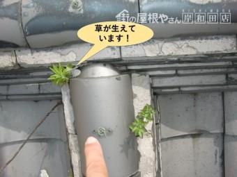 岸和田市の棟の隙間から草が生えています!