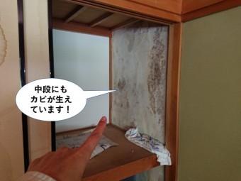 泉大津市の中段にもカビが生えています
