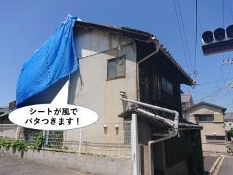 熊取町の屋根の応急処置のシートが風でバタつきます