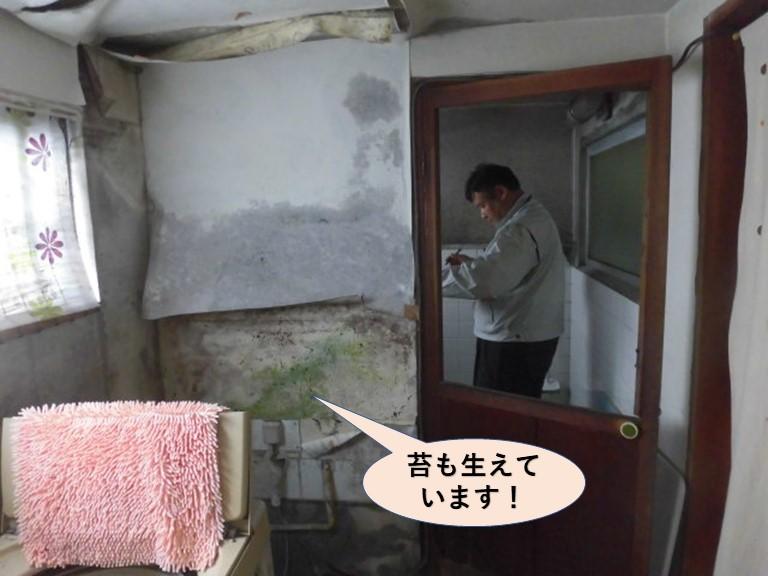 岸和田市の洗面所の壁に苔も生えています