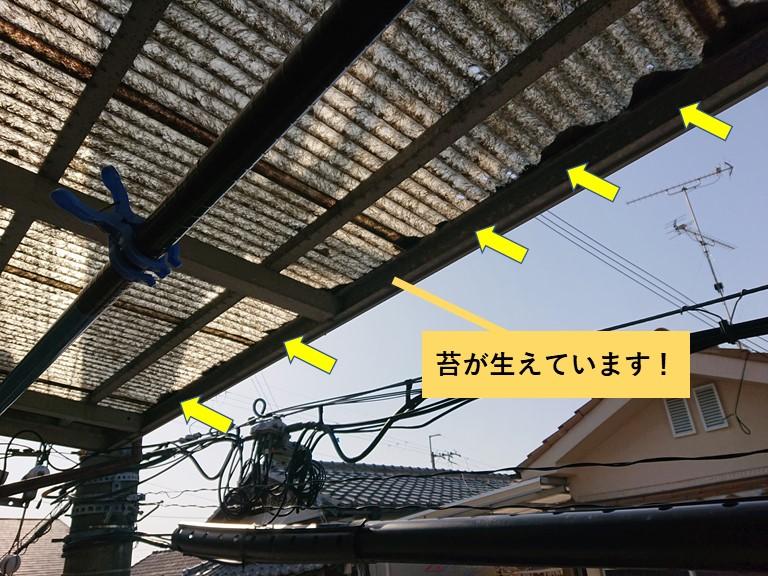 泉大津市の波板に苔が生えています