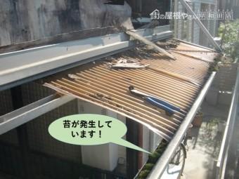 堺市中区の波板の下に苔が発生!