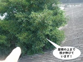 岸和田市の倉庫の屋根の上まで枝が伸びています