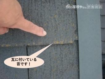貝塚市の瓦に付いている苔