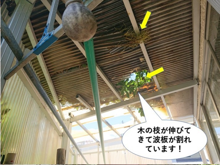 岸和田市の木の枝が伸びてきて波板が割れています