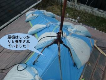 和泉市の屋根はしっかりと養生されていました