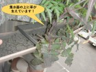 和泉市の工場の集水器の上に草が生えています!