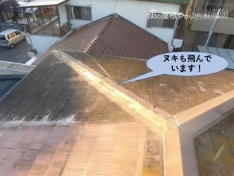 泉大津市の屋根のヌキも飛んでいます!