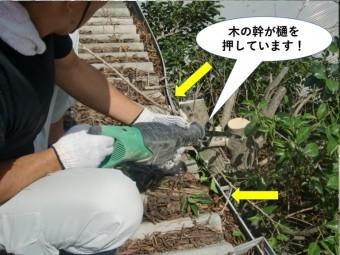 岸和田市の木の幹が雨樋を押しています