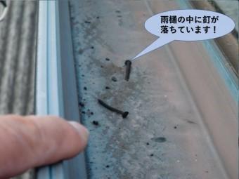 阪南市の雨樋の中に釘が落ちています!