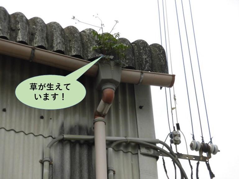 和泉市の工場の雨樋の中に草が生えています