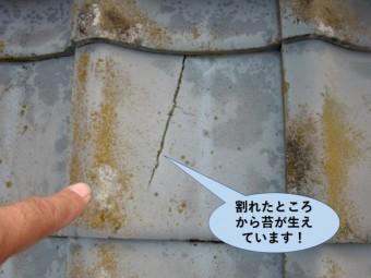 和泉市の瓦の割れたところから苔が生えています