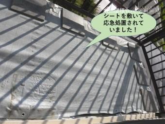 岸和田市のバルコニーにシートを敷いて応急処置