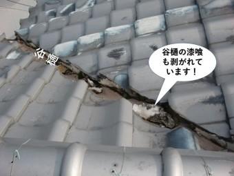 貝塚市の谷樋の漆喰が剥がれています